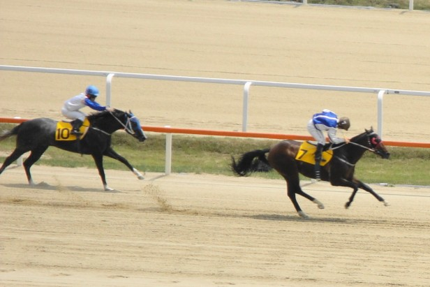 Seoul Horse Racing Action