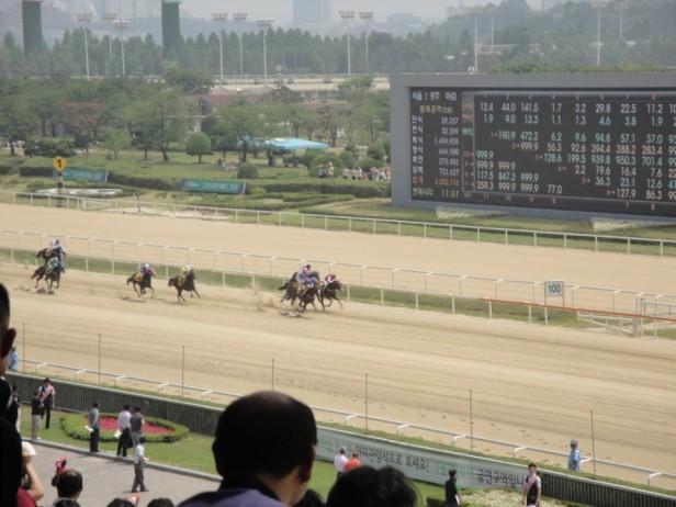 Seoul Racecourse Horse Racing Live