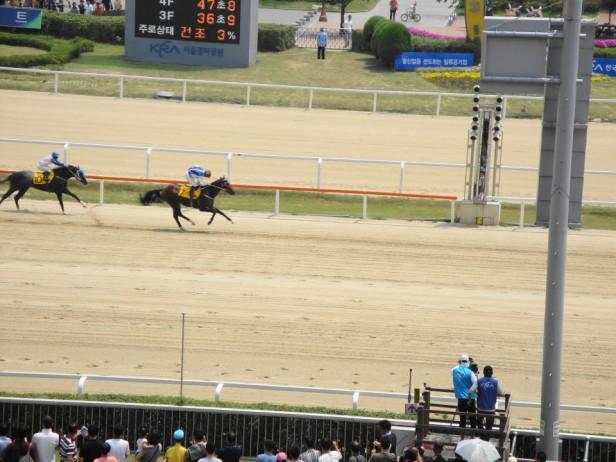 Seoul Racecourse Horse Racing