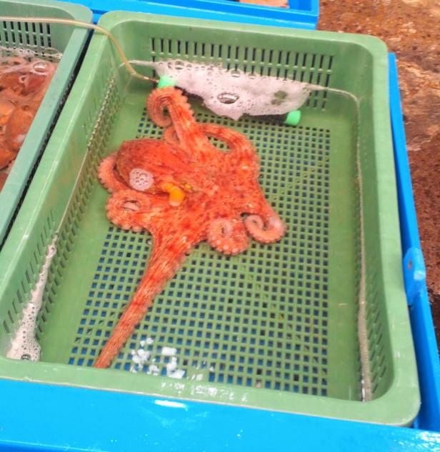 Gyesan Market, Incheon - Octopus