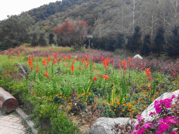 Herbnara Farm Gangwon-Do Flowers