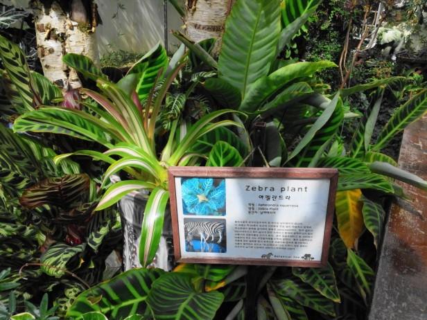 Herbnara Farm Gangwon-Do Zebra Plant