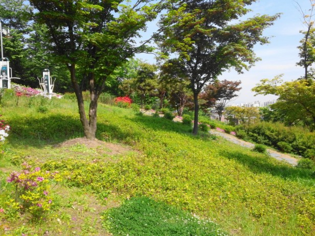 Imhak Park Incheon Grass