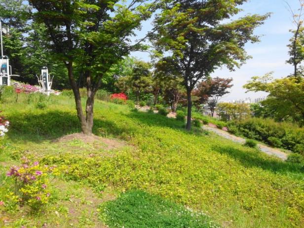 Imhak Park Incheon Grass