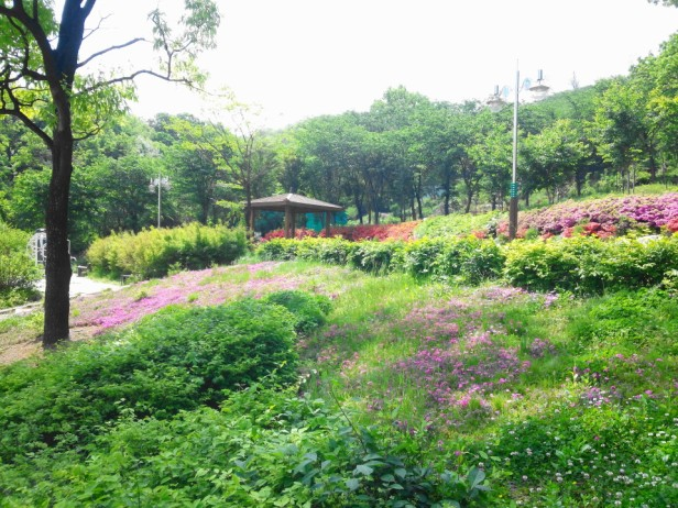 Imhak Park Incheon Wildflowers