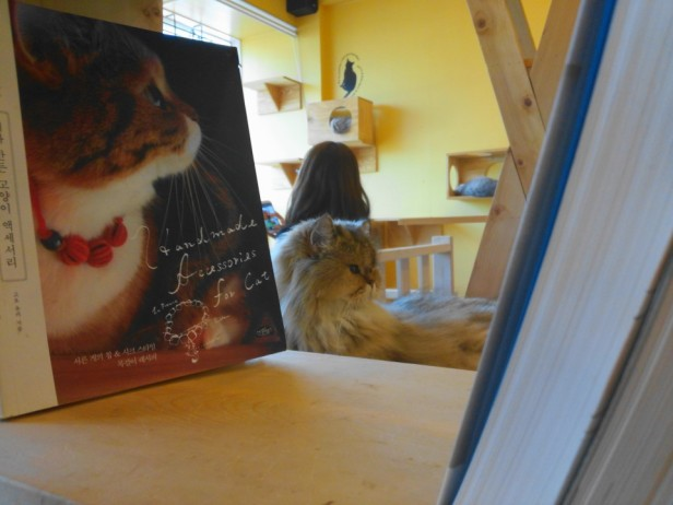 Incheon Cat Cafe Books