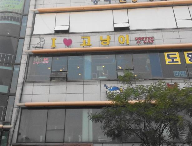 Incheon Cat Cafe Outside Gyesan