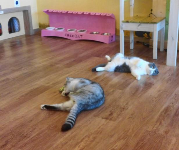 Incheon Cat Cafe Sleepy