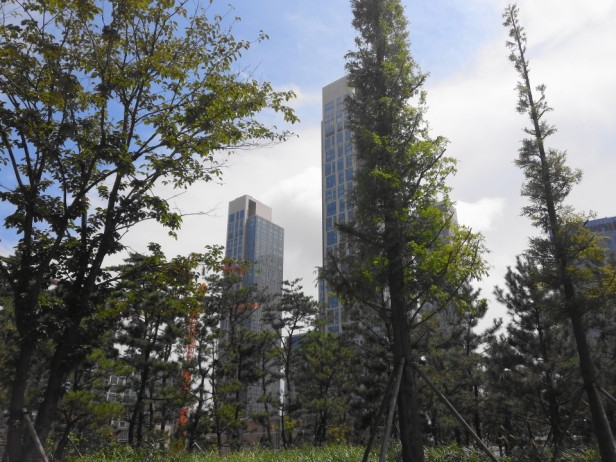 Songdo Central Park and Lake Incheon Trees