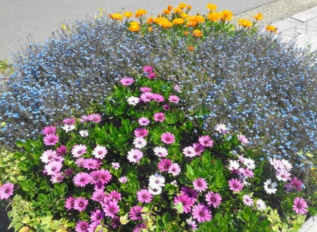 Seoul World Cup Park Flowers