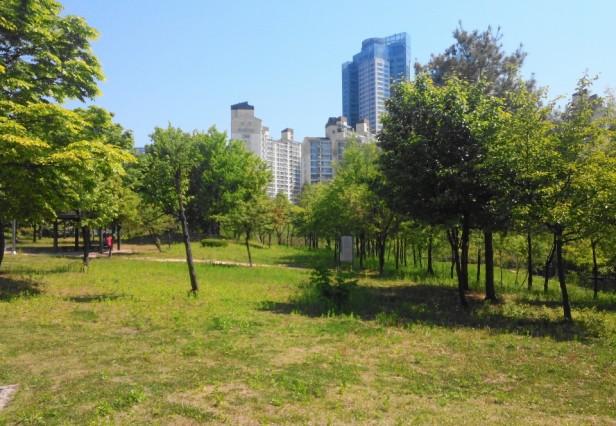 Seoul World Cup Park Grass
