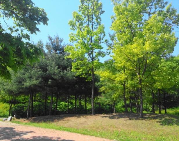 Seoul World Cup Park Trees