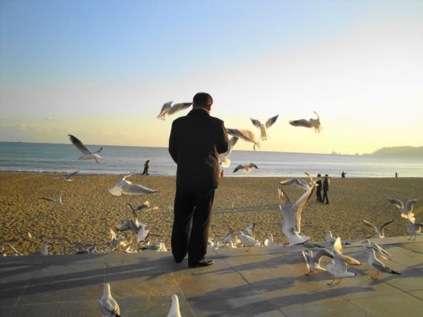 Man Feeding the Seagulls on Haeundae Beach - Busan