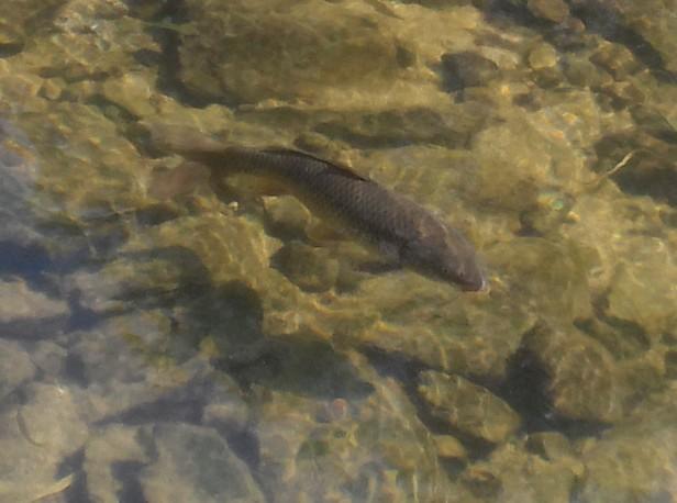 Cheonggye Stream Fish Seoul