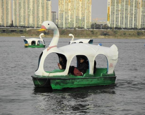 Han River Swan Boat - Seoul