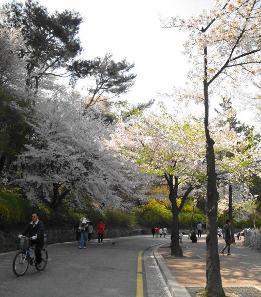 Seoul Springtime Street