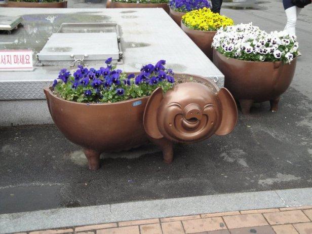 Busan Pig Flower Pot 2015