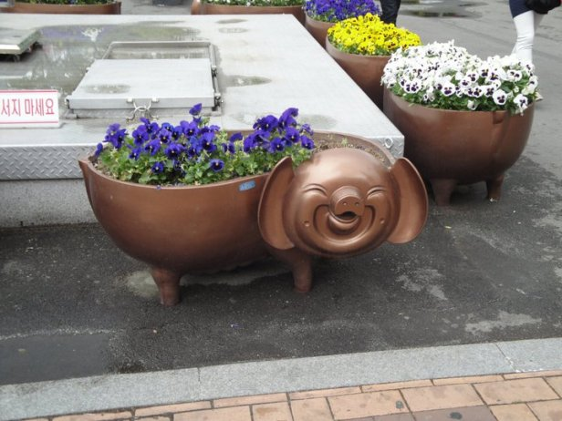 Busan Pig Flower Pot 2015