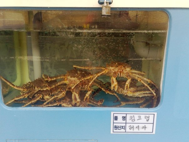Live King Crab for Sale in Suwon