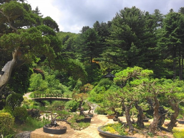The Garden of Morning Calm Gapyeong KR (17)