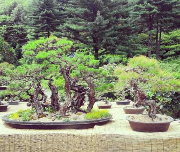 The Garden of Morning Calm Gapyeong KR (5)