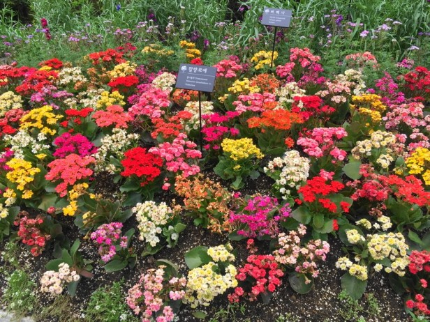 The Garden of Morning Calm Gapyeong KR (8)