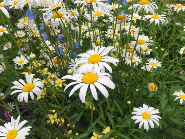 The Garden of Morning Calm Gapyeong KR flower